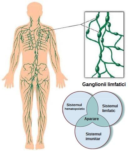 cancer ganglioni limfatici