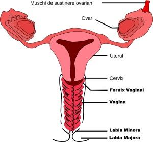 Cancer vaginal