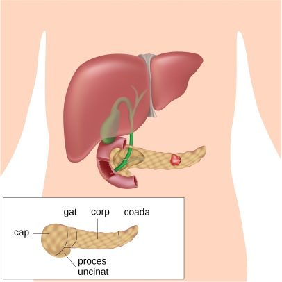 Cancerul pancreatic - Ghid cancer Medicinas